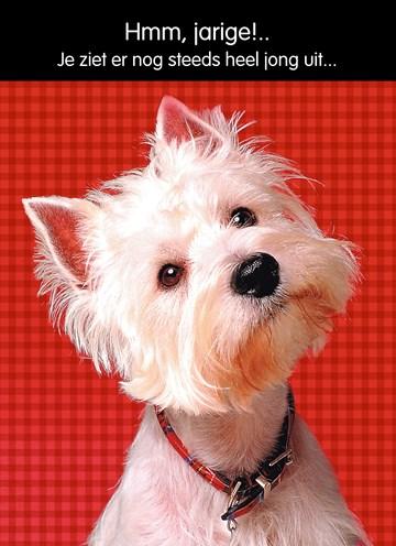 - hond-met-rode-achtergrond