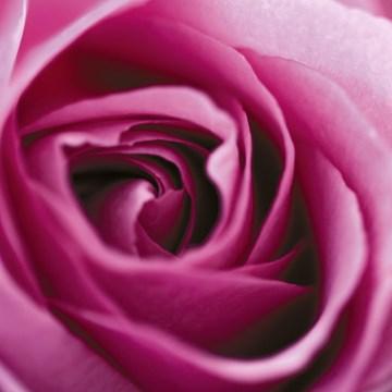 - een-rode-roos-voor-jou