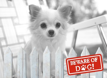 - beware-of-dog