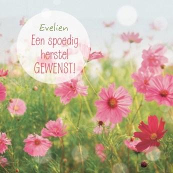 - een-veld-vol-bloemetjes-voor-jou