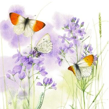 - vlinders-vliegen-rond