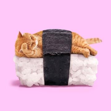 - sushi-kat