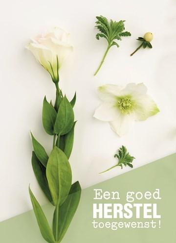 - botanical-kaart-een-goed-herstel-toegewenst