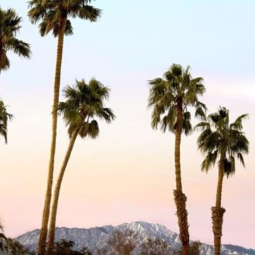 - palmbomenmet-zon