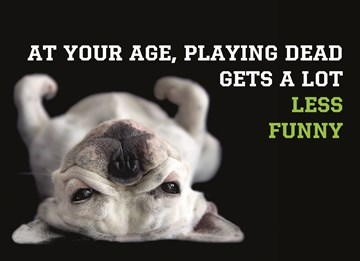 Dierendag kaart - animal-fiesta-at-your-age-playing-dead-gets-a-lot-less-funny