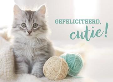 - animal-fiesta-gefeliciteerd-cutie