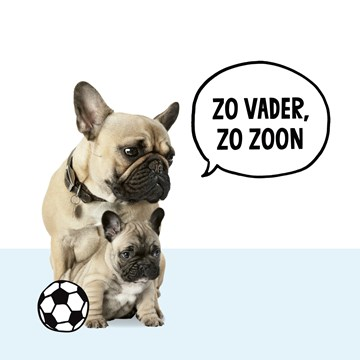 - pugs-zo-vader-zo-zoon