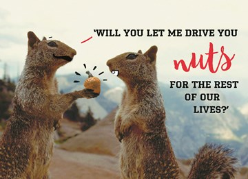 - animal-fiesta-will-you-let-me-drive-you-nuts