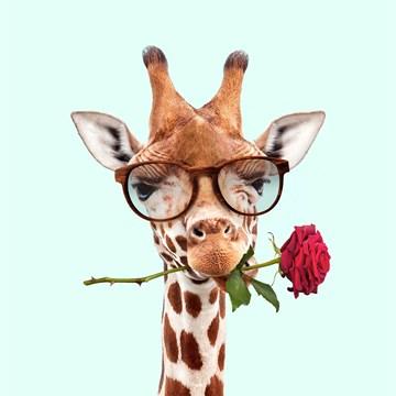 Valentijnskaart - liefdeskaart-grappig-Giraffe-met-roos
