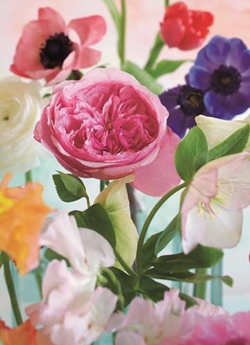 - bloem-bloemen