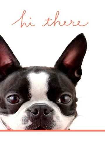 Dierendag kaart - hond-zegt-hi-there
