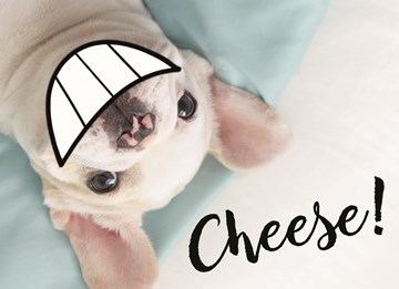 - animal-fiesta-cheese