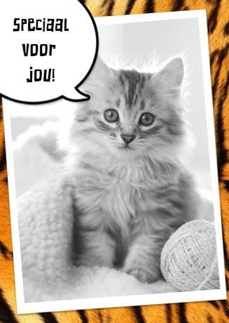- speciaal-voor-jou-een-katje