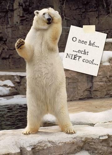 Te laat verjaardagskaart - verwarde-ijsbeer