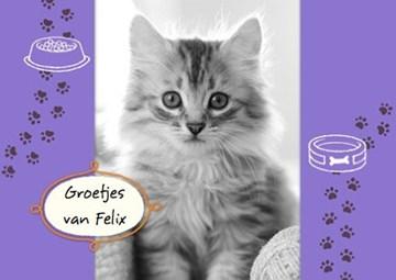 - fotokaart-met-groetjes-van-onze-kat