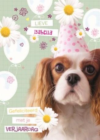 - prodo-dieren-lieve-gefeliciteerd-met-je-verjaardag