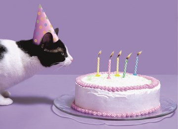 verjaardagskaart vrouw - blits-taart-en-kat