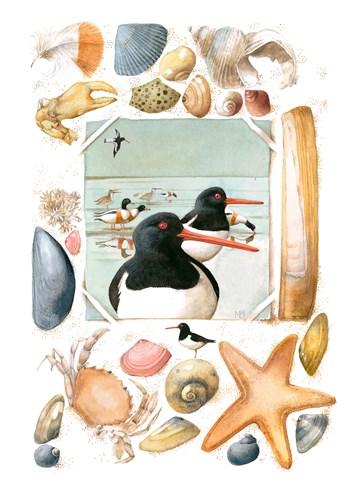 - vogels-en-schelpen