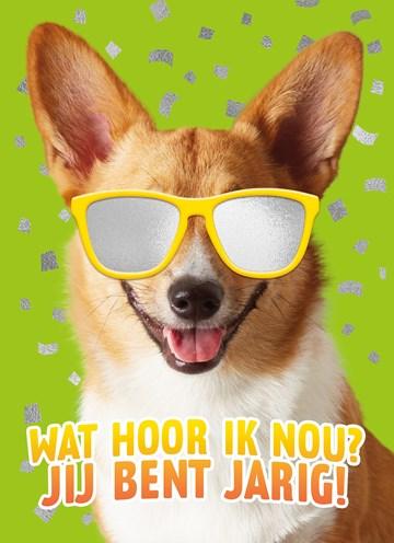 - wat-een-coole-hond-voor-je-verjaardag