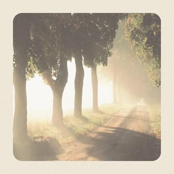 Deelnemingskaart - Rouwkaart - morning-forest