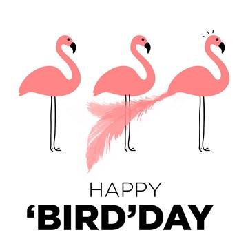 - flamingos-happy-birdday