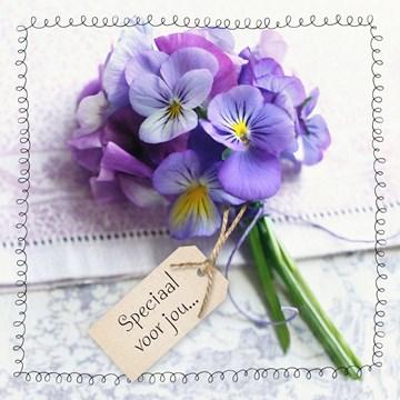 - paarse-viooltjes-speciaal-voor-jou