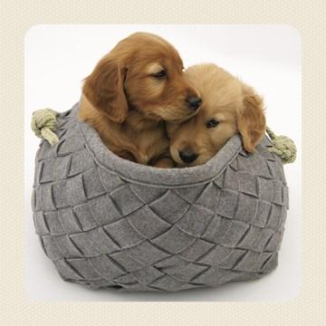 - twee-liefe-puppys
