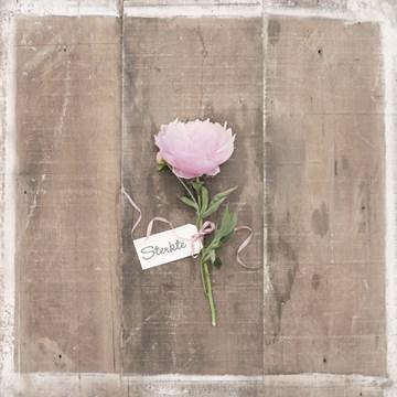 - condoleance-kaart-een-bloem-om-je-sterkte-te-wensen