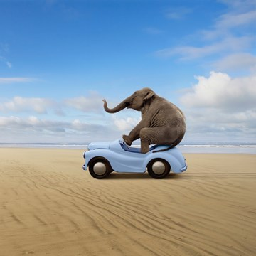 - olifant-in-auto