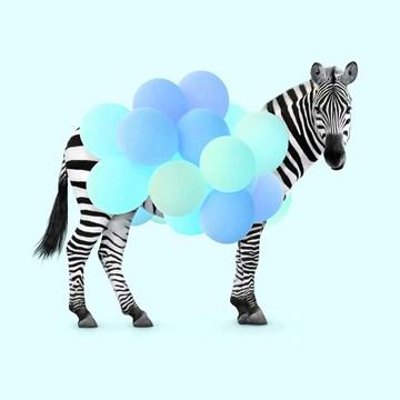 - zebra-met-ballonnen-blauw