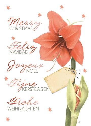 - Marjolein-Bastin-Kerst-amarylis