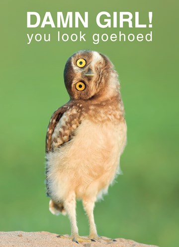 - damn-girl-you-look-goehoed