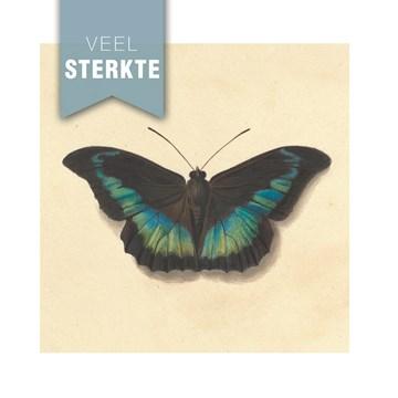 - studio-art-kaart-veel-sterkte-met-vlinder