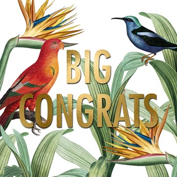 - big-congrats-met-deze-vogels