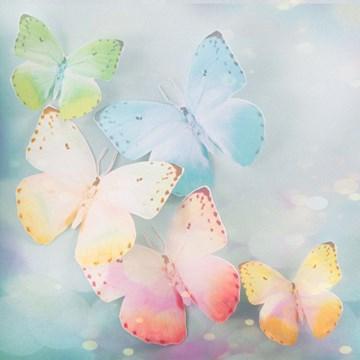 - vlinders-blanco-