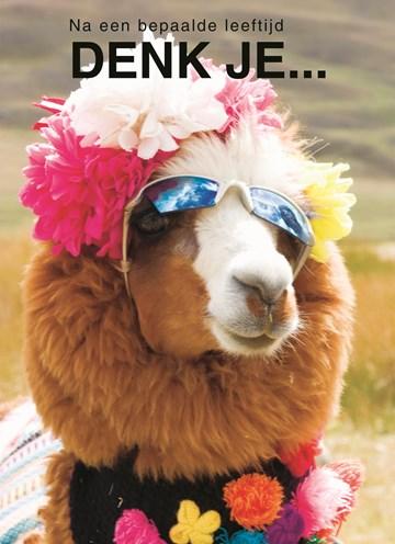 Top Verras haar met grappige verjaardagskaarten | Hallmark #ZF03