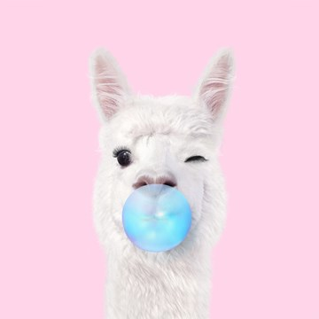 - Verjaardagskaart-tiener-grappig-Alpaca-met-kauwgum