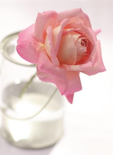 Deelnemingskaart - Rouwkaart - een-enkele-roos-in-een-glazen-vaas