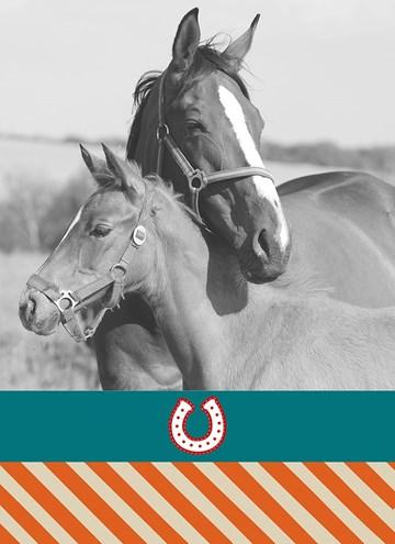 - fotokaart-voor-paarden-