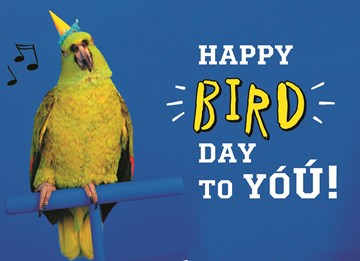 - animal-fiesta-happy-bird-day-to-you