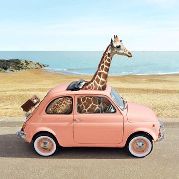 verjaardagskaart vrouw - giraf-in-kleine-auto