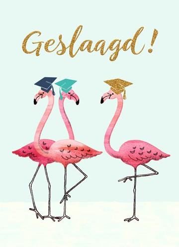 Geslaagd / Diploma kaart - Flamingo-geslaagd