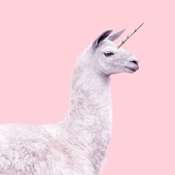 - alpaca-eenhoorn