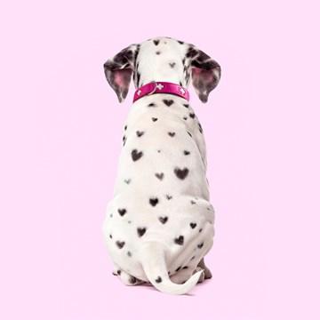 Valentijnskaart - hond-met-hartjes