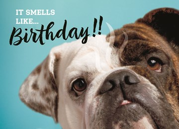 - animal-fiesta-it-smells-like-birthday