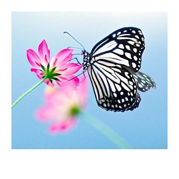 Deelnemingskaart - Rouwkaart - Condoleancekaart-vlinder