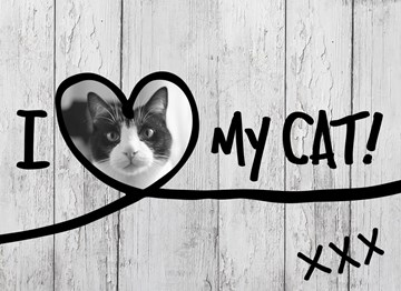 - i-love-my-cat