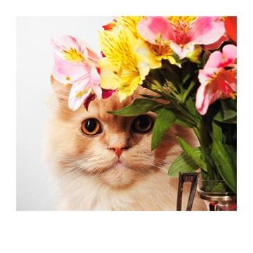 - Beterschapskaart-Kat-met-bloemen-Polaroid