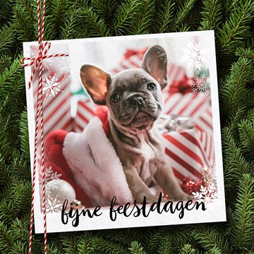 - kerstkaart-fotokaart-hond-fijne-feestdagen