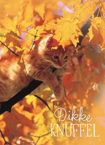 Herfst kaart - herfst-kaart-dikke-herfst-knuffel